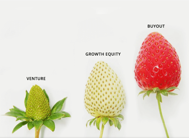 Private Equity Investments in Technology:  Private Equity and Venture Capital Strawberries Example
